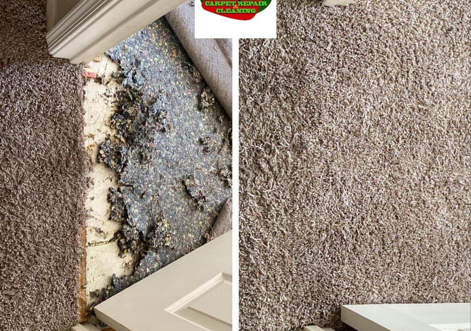 Scottsdale, AZ: Carpet Repair